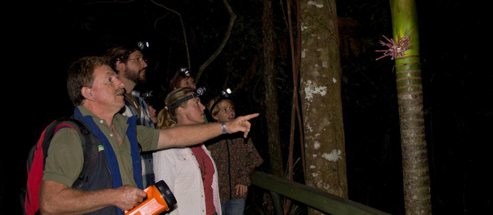 Adventure Puketi - a new experience to be in the forest at night - sets the senses alive!