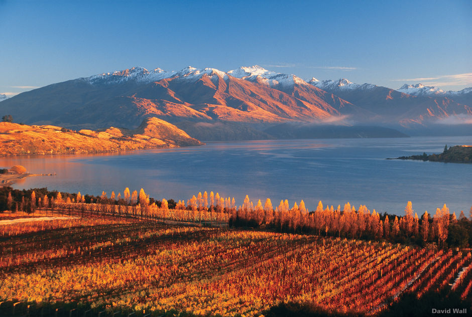 Rippon Vineyard in Wanaka.