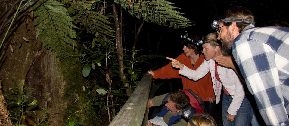 Adventure Puketi - The Forest comes alive at night and full of fascination.