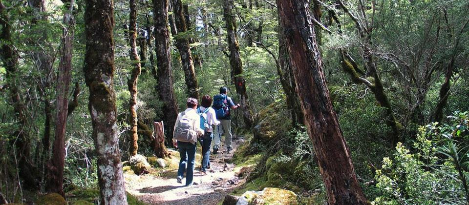 New Zealand Hiking vacations from budget to luxury