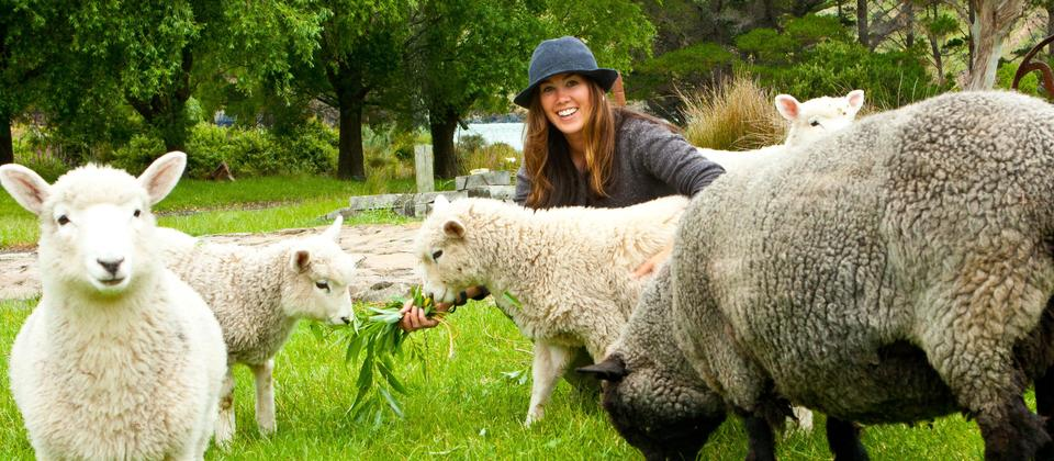 Our cute pet sheep and pet lambs being hand fed.