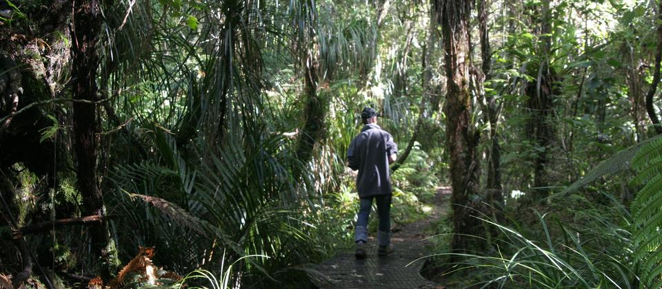 Adventure Puketi - Guided Forest Walks