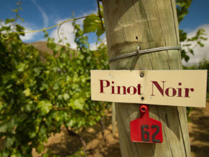 pinothouse-gibbstonvalleywinery.jpg