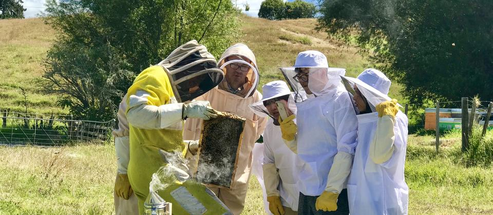 Hands on beekeeping experience