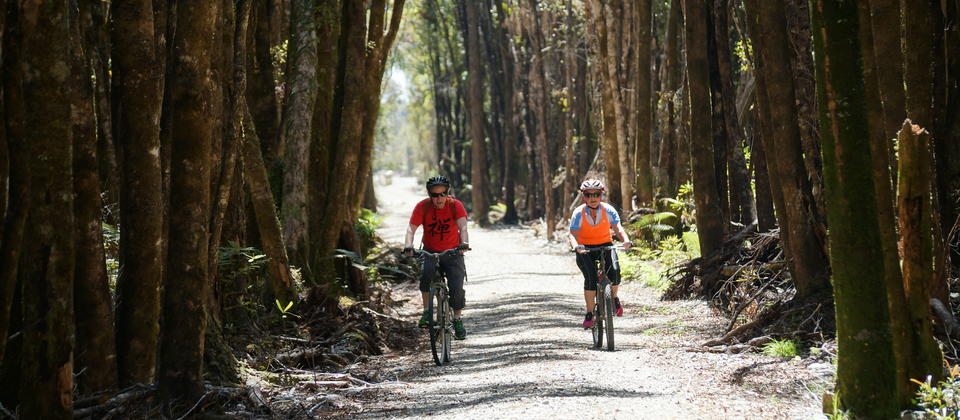 Cycling up the old rail line through the rainforest towards Kumara