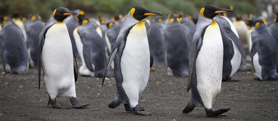 Discover the wonders of the Sub-Antarctic Islands