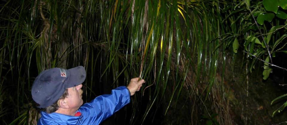 Adventure Puketi - Guided Night Forest Walks