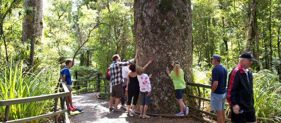 Adventure Puketi Bay of Islands  Home of the giant Kauri Trees in subtropical rainforest.