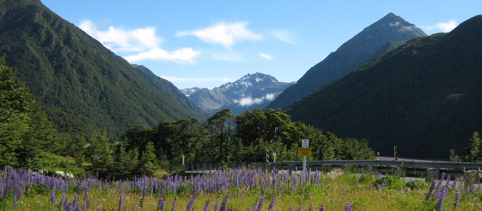 Summer lupins and Mt Oates, Arthur's Pass National Park