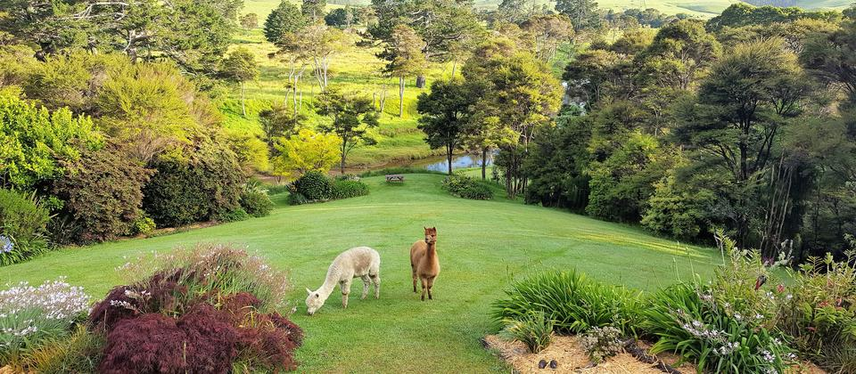 View from Decks (Morning stroll for our Alpaca).jpg
