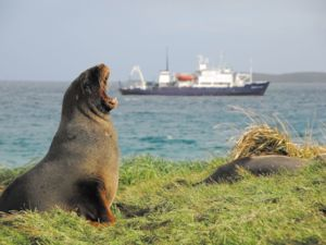 A Subantarctic Island local