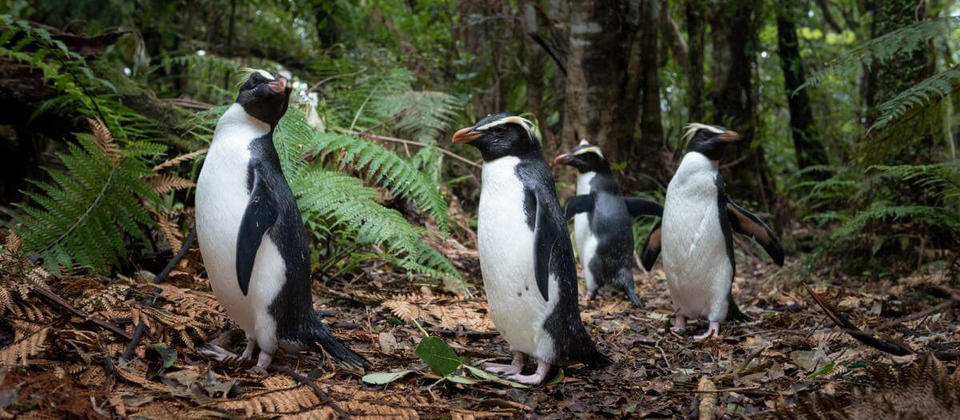 Penguins in the Forest