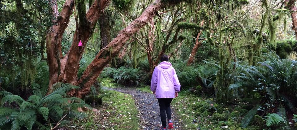 Waitomo Great Walk