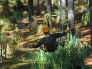 Zipline fun at Tree Adventures