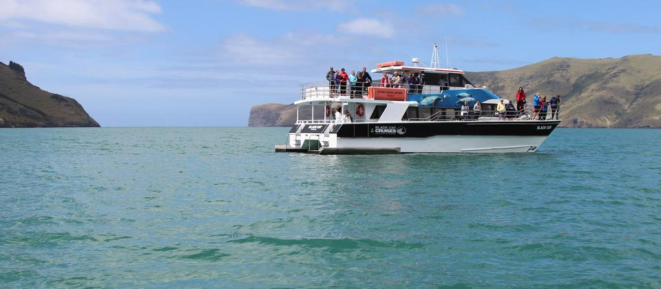 Dolphin spotting on the Akaroa Harbour Nature Cruise