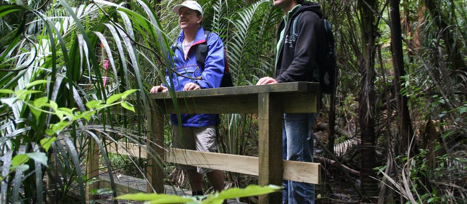Guided Forest Walks - Adventure Puketi - streams and abundant birdlife make for a fascinating journey in the NZ Rainforest - Bay of Islands.