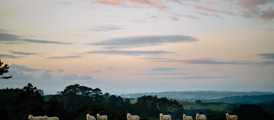 In New Zealand, we have unique landscapes that make for surreal wedding locations. We also have the highest density of sheep per unit area in the world.