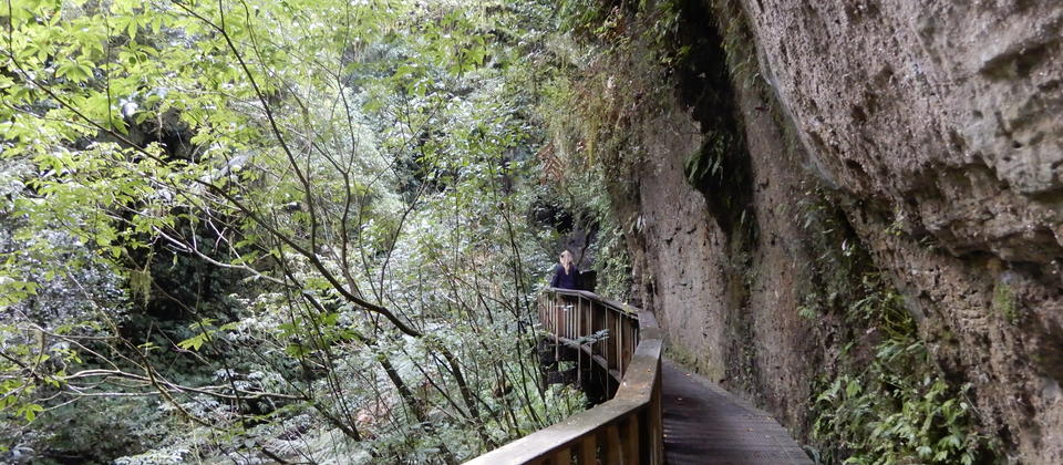 Earth (Whenua) Tour featuring Mangapohue natural land bridge