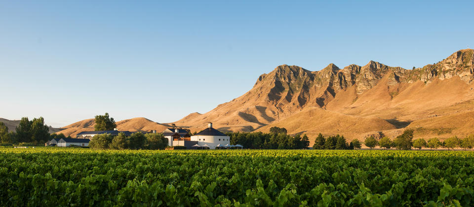 View of winery peak from vines 001.jpg