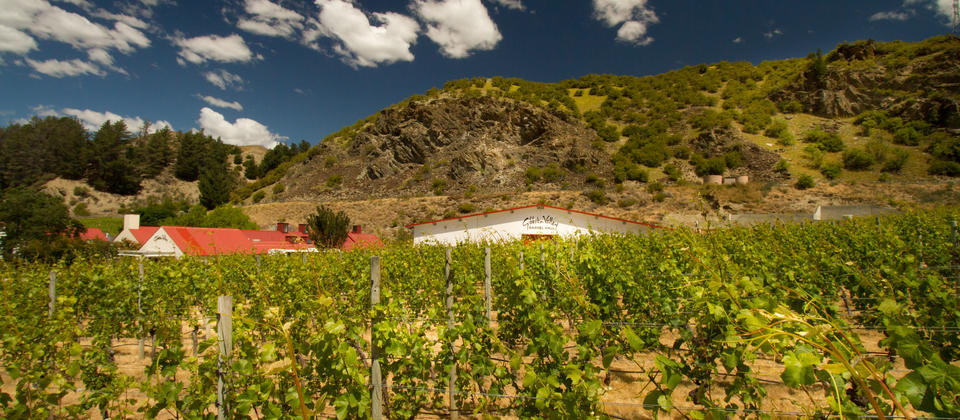 Pioneers of the Central Otago wine region.