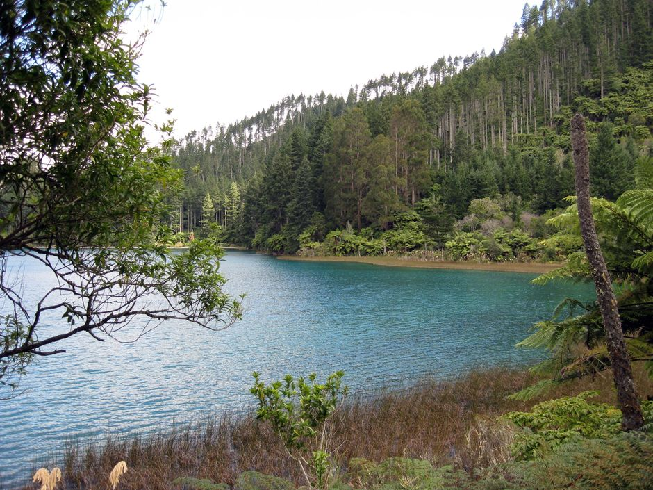 This easy walking loop circles Rotorua's beautiful Blue Lake, taking in pristine beaches, native bush and the exotic conifers of Whakarewarewa Forest.