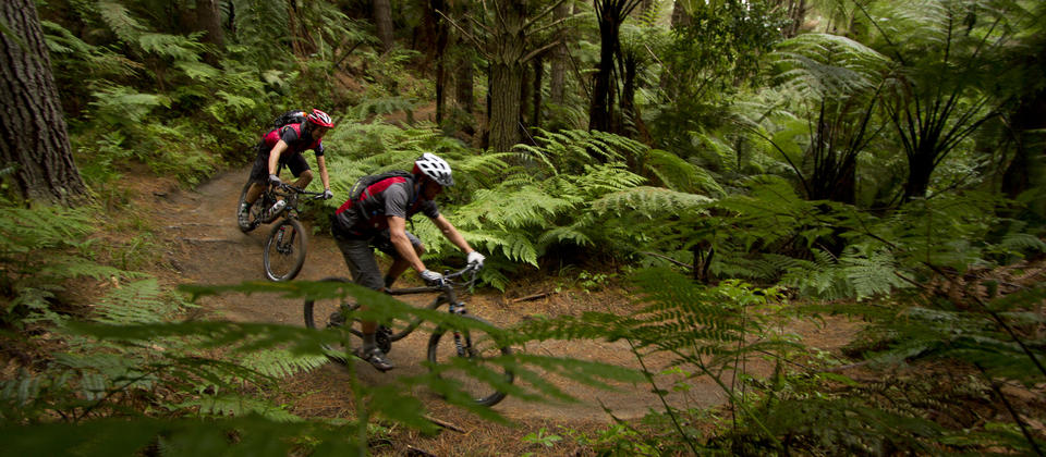 Mountain Biking in the Whakarewarewa Forest.
