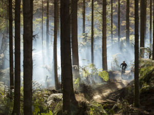Whakarewarewa Forest, known simply as 'The Redwoods', is a mountain biking mecca.