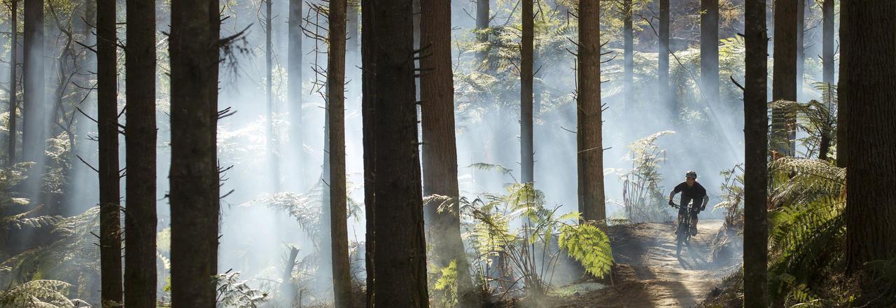 Whakarewarewa Forest, known simply as 'The Redwoods', is a mountain biking mecca.