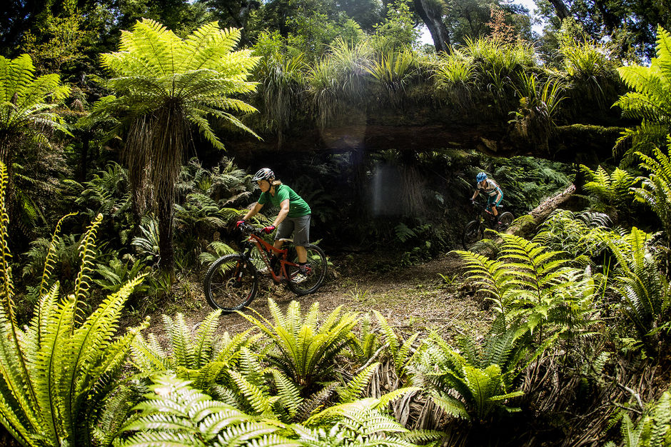 Ride through the wilderness of Whirinaki Forest near Rotorua on this advanced track featuring towering trees and historic trekking huts.