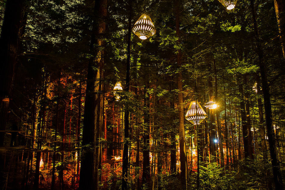 Redwoods Treewalk Rotorua at night