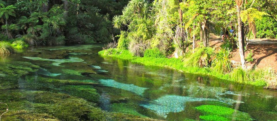 Hamurana Springs famous for its beautiful crystal clear fresh water springs.