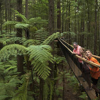 The Redwoods Treewalk is a over half a kilometre long walkway that consists of a series of 21 suspension bridges - a delight for both kids and adults.