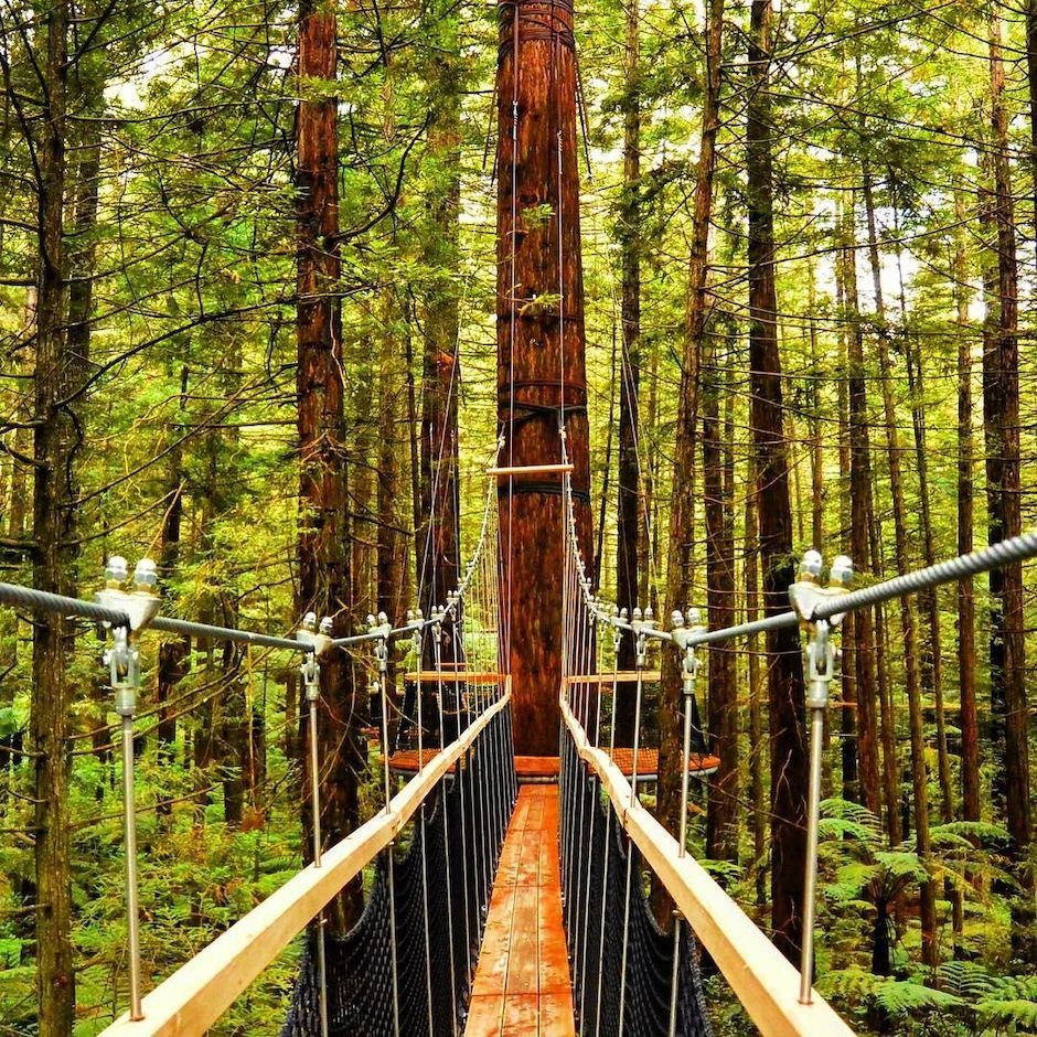 Redwood Forest Suspension Bridges