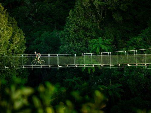 The Timber Trail | Hamilton - Waikato, New Zealand