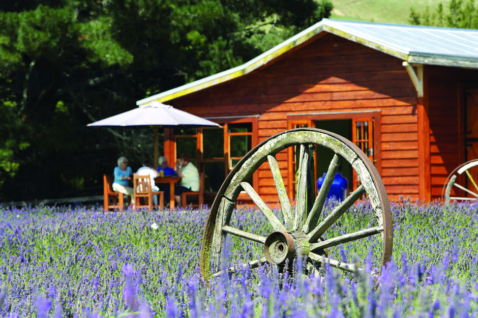Enjoy lunch or afternoon tea at Lauren's Lavender Farm in Taumarunui.