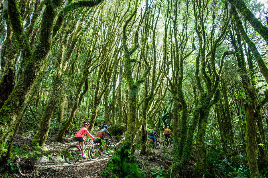 Following old logging roads and tramlines, The Timber Trail traverses an exotic forest in the heart of the North Island.