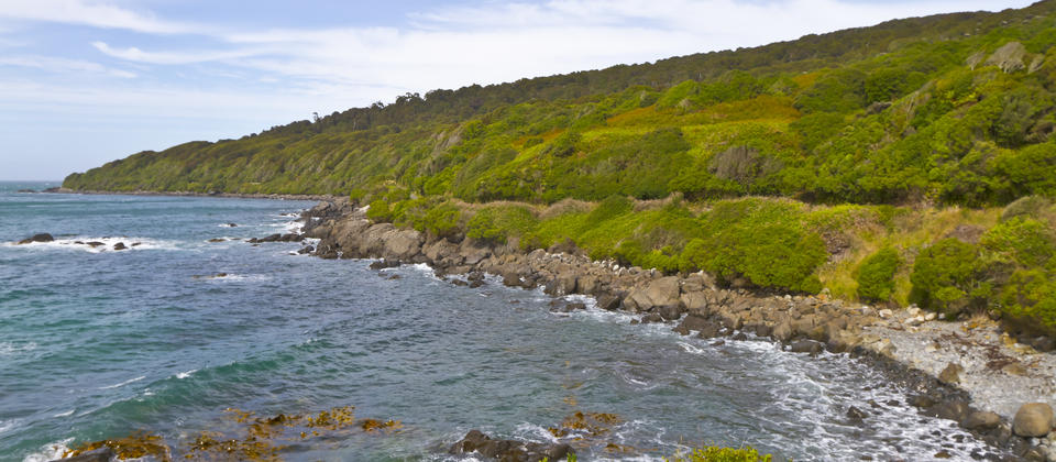 You can access the Foveaux Walkway from Stirling Point. This walkway consists of two separate but connected trails on Bluff Hill peninsula. Both traverse a wide variety of vegetation, including native bush (with a variety of native birds), coastal scrub a