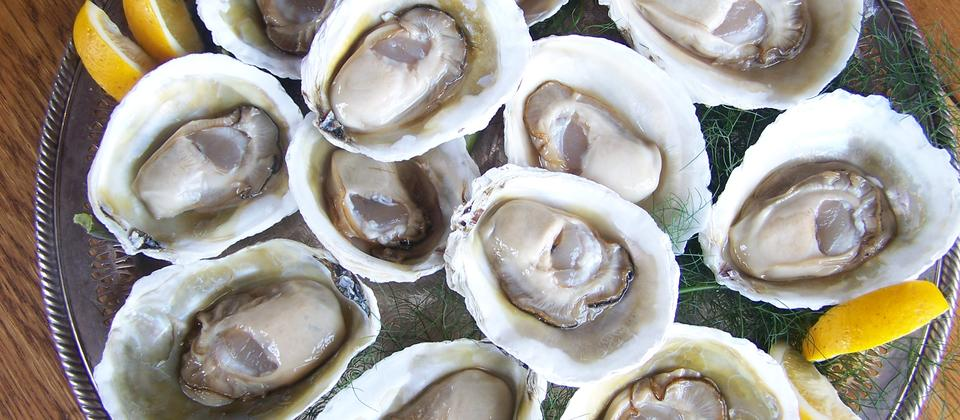 Oysters, fresh from the farm