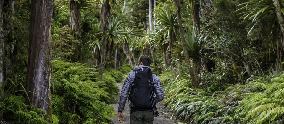 Hiking through the rainforests of Mount Taranaki, Egmont National Park