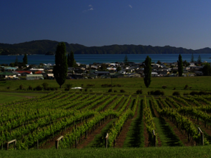 Mercury Bay Estate Vineyard