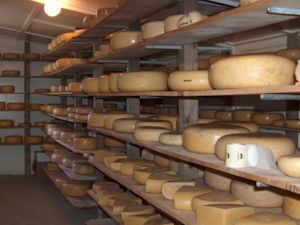 The Cheese Barn at Matatoki