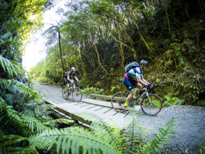 Bush in Rimutaka Cycle Trail