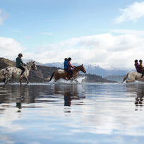 Horse riding in the Clutha River, Wanaka
