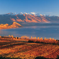 In autumn, Rippon vineyard turns every shade of yellow, gold and red.