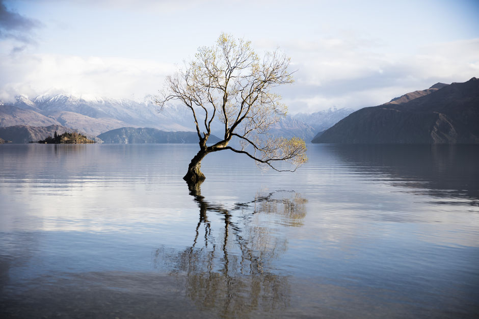 Picturesque lone tree at Lake Wanaka