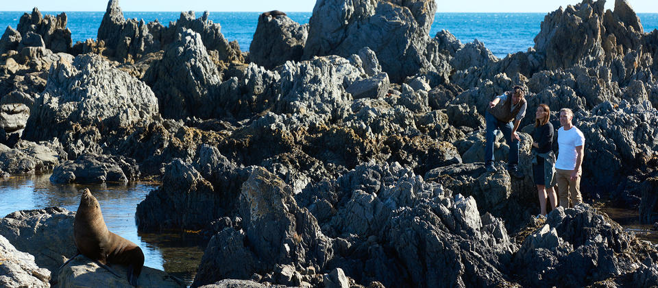 A coastal walks to the Red Rocks Reserve, south of Wellington, features glorious views and even a fur seal colony.
