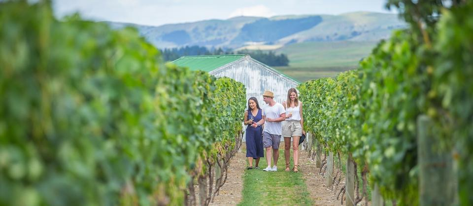 Vineyard in Martinborough