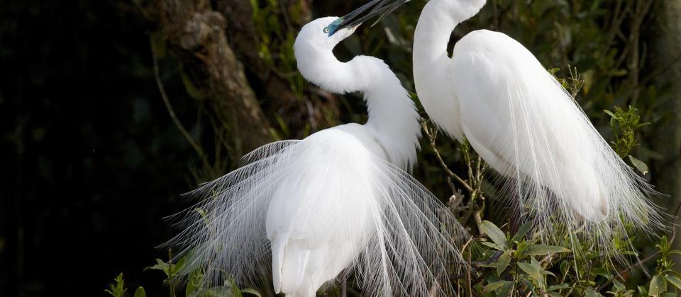 Whataroa, on the West Coast, has New Zealand's only white heron nesting colony. Take a White Heron Sanctuary guided boat tour to to view it.