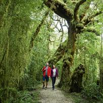Gaze in wonder at nature's work set amidst native forests in Kahurangi National Park.