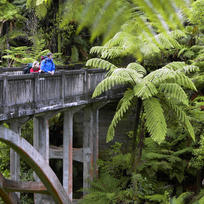 Take a jet boat ride or kayak to this fascinating site deep in the ancient forest.